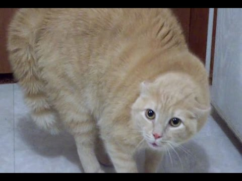 WARNING! EXTREMELY FUNNY CAT VIDEOS – Funny cat compilation