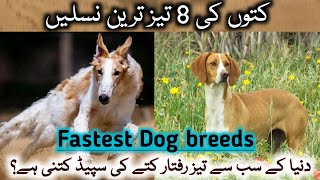 Fastest Dog breeds in the world|KhialeeWood