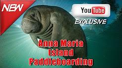 Manatees paddle boarding Anna Maria Island