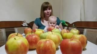 Яблочная диета. 🍎 Часть 1. Эксперимент на себе