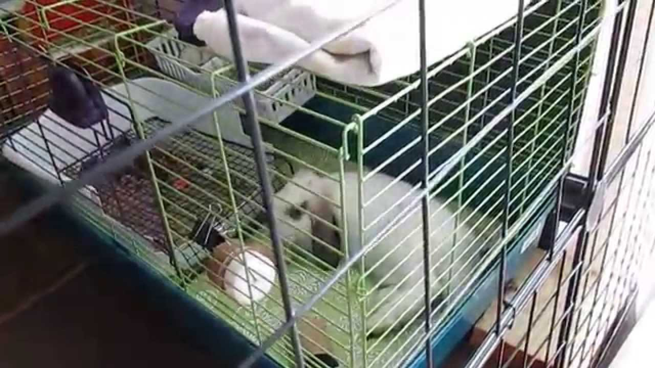 rabbit indoor cage set up for small space daisy jasper s