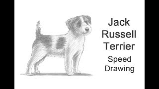 Jack Russell Terrier Dog Time-lapse / Speed Drawing