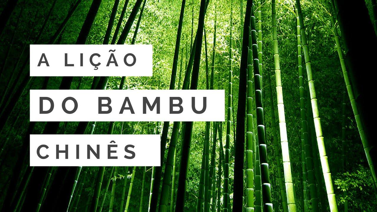 Resultado de imagem para bambu chines
