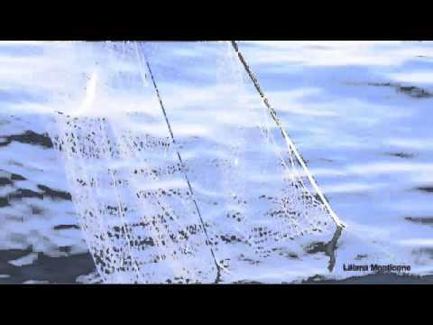 A bordo del Pingone per un'esperienza di pesca turistica.