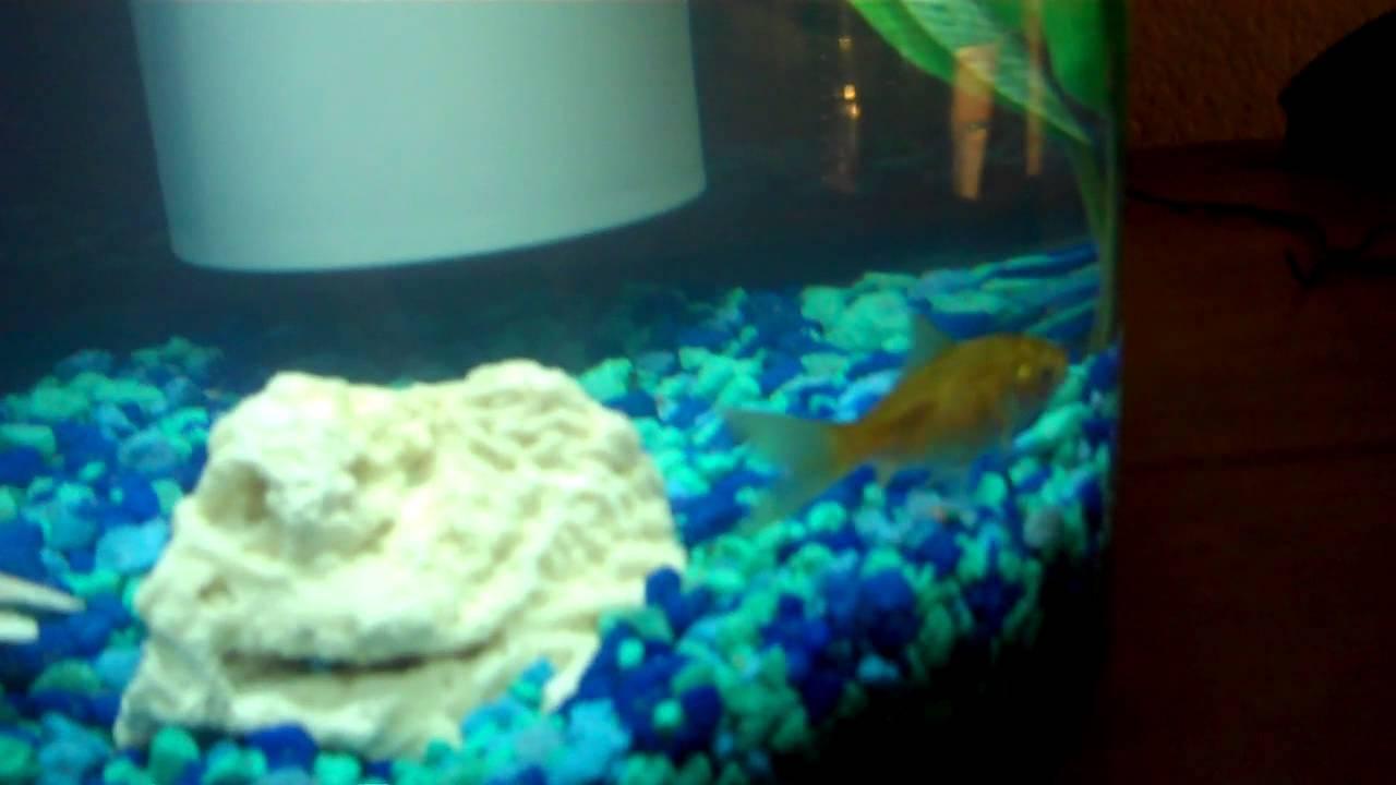 New Fish Tank!!! Marina 360 2.64 gallon aquarium kit - YouTube