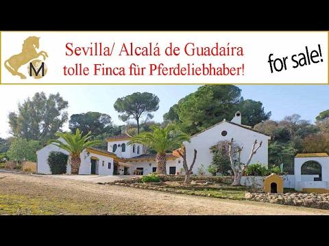 Finca mit profitabler Olivenplantage, Pferdeboxen, Sevilla, Andalusien zu verkaufen