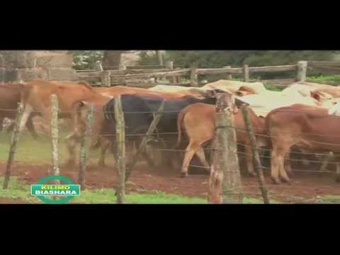 EMBRYO TRANSFER TECHNOLOGY IN DAIRY CATTLE