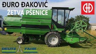 Đuro Đaković | Deutz Fahr -  Žetva pšenica Belica