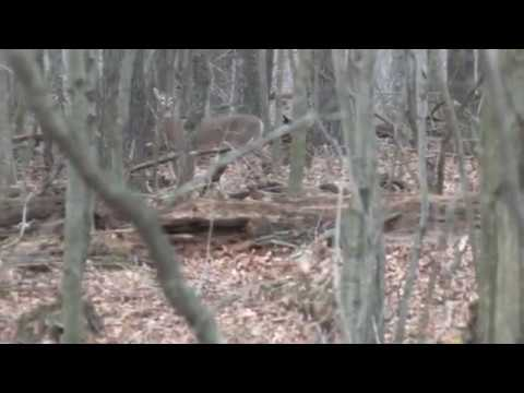 Hunting Land 50 Acres Near Wisconsin Dells