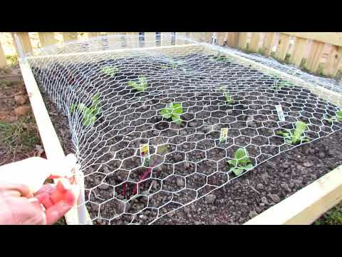 How To Protect Your Vegetable Garden From Rabbits & Deer: Build A Chicken Wire Horizontal Fence!