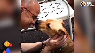 Guy Can't Stop Adopting Two-Legged Dogs - DEUCE | The Dodo