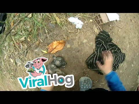Kind Human Rescues Drowning Puppy || ViralHog
