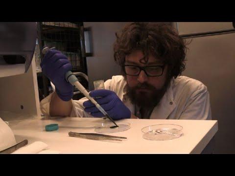 """afpes: Científicos chilenos crean piel """"fotosintética"""", regenera tejido"""