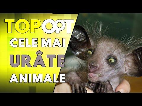 Cele mai urate animale din lume