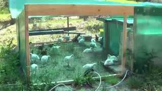 Мой загончик для цыплят Мой курятник - уход за курами по выходным(Мой загончик для цыплят от 2х недель и выше Мой курятник - уход за курами по выходным., 2015-05-31T17:32:36.000Z)
