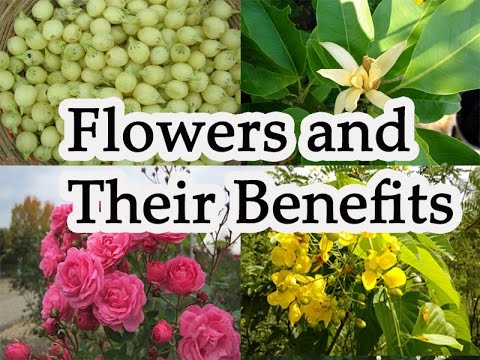 medicinal flowers and their uses Is your local nursery's selection of medicinal herbs uninspiring thankfully, there   harvesting: harvest the flowers in their early stages dry until crisp  one  great way to use this herb is in herbal dream pillows zone: 3 – 9.