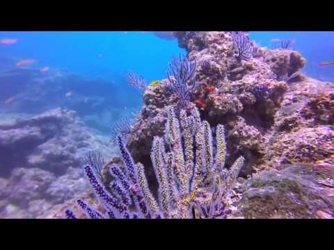Puerto Vallarta dives June 20 23 24 2015