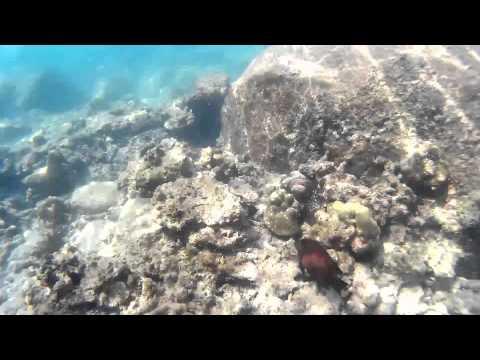 Snorkeling In Thailand (Freedom Beach, Patong, Phuket), December 2014