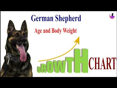 German Shepherd Growth chart II dog and vet II Hindi