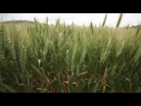 2013 Platinum Laureate - Washington Grain Commission