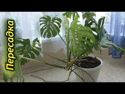 Вопрос: Какое растение пересадить из дикой природы домой, чтобы прижилось?