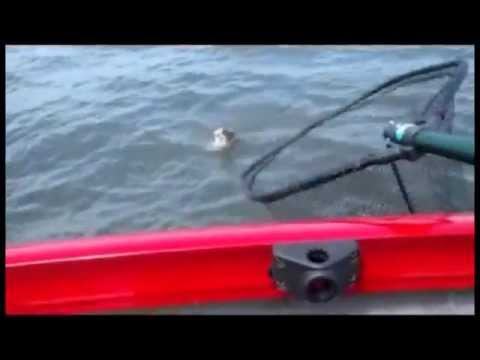 Heidecke Lake Walleye, Striper, Crappie, Bluegill, And Black Drum