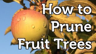 How to Prune a Fruit Bearing Apple Tree