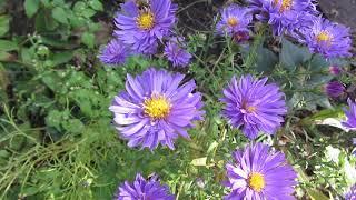 Красивые осенние цветы