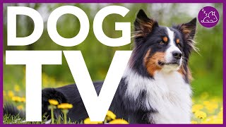 DOG TV - Entertain Your Dog For Hours - Virtual Dog Walk (NEW)