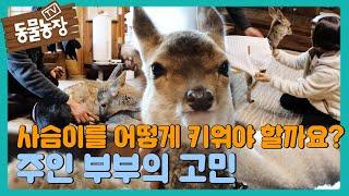 """""""사슴이를 어떻게 키워야 할까요?"""" 주인 부부, 사슴이를 위한 방법 고민! I TV동물농장 (Animal F…"""