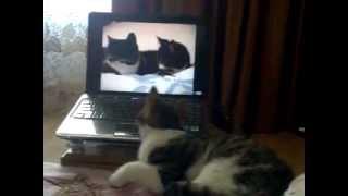 Кот скучает...