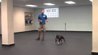 Starting A Dog On A Prong Collar With Conversational Leash Work | Tyler Muto Dogmanship