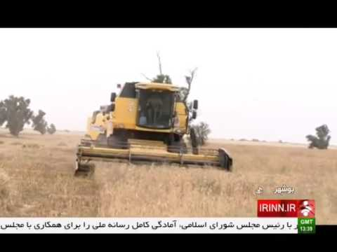 Iran Bushehr province, Mechanized Wheat harvest برداشت مكانيزه گندم استان بوشهر ايران