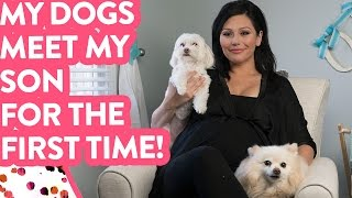 Introducing My Dogs to My Son!