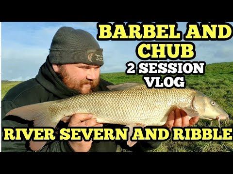 FLOODWATER FISHING FOR BARBEL AND CHUB - RIVER SEVERN AND RIBBLE