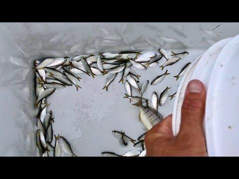 This Bait Equals Fishing Success