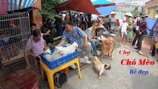 Chợ bán chó mèo cảnh thú cưng mới nhất | Hỏi giá chó mèo