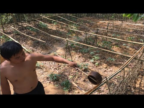 Primitive Technology:Watering system!Primitive life-wilderne