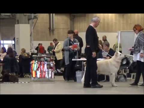 20171105 DKK Int Dog Show Herning HSH