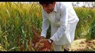Best Saraiki Very Funny Comedy Video Clip 2018
