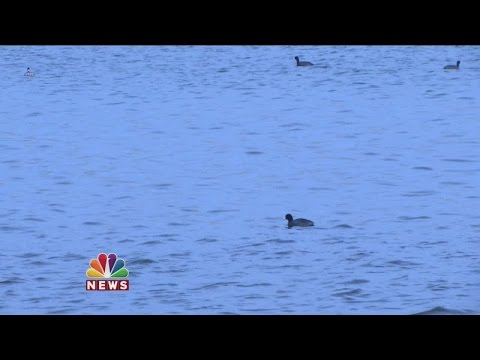 You Ask. We Investigate. ® Coot Shoot