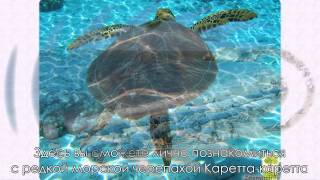 Самое красивое место на земле — бухта Навагио на острове Закинф в Греции(Райский отдых существует, а расположен он в бухте Навагио, что на острове Закинф в Греции. Читайте подробне..., 2014-05-24T18:55:36.000Z)