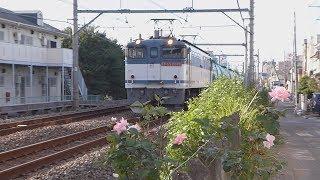 高崎線EF65/EF210牽引貨物列車  上尾附近通過