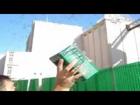 dispositifs anti pigeons et anti oiseaux - youtube