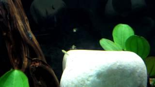Amazonic Type Aquarium
