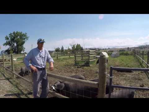 ABC acres: Follow the Leader - Rotational Grazing Scheme - episode #041