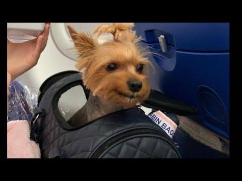 Вопрос: Как взять с собой собаку на отдых В отпуск, на море?