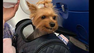 VLOG:Летим с собакой на море.