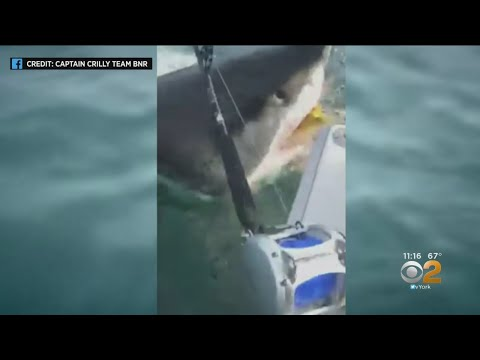 Great White Shark Stuns New Jersey Fishermen
