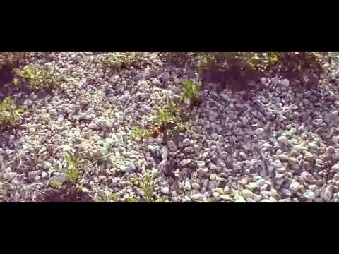 Kg aka killer.g  living  ( music video )